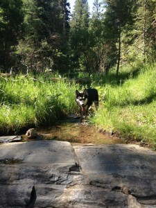 Audra Ogilvy and Profit at Beaver Brook Trail in Colorado