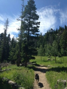 Buchanan Pass Trail in Peaceful Valley in Colorado