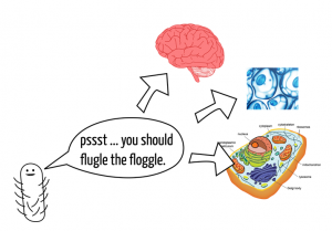 Gut bacteria communicate with organelles, cells, and the brain.